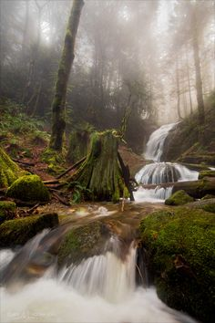 Coal Creek Falls near Renton, WA - I am hiking this today!