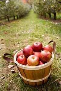 Foods You Should Always Buy Organic - the dirty dozen +
