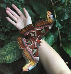 Huge beautiful moth