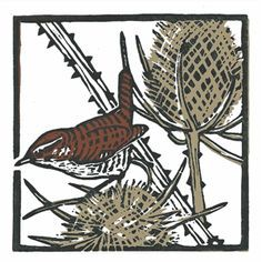 Teasel Wren by Vanna Bartlett (Printmaker) Woodcut Art, Linocut Prints, Art Prints, Block Prints, Stencil Wood, Cross Stitch Bird, Plant Illustration, Bird Art, Printmaking