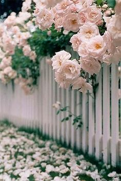 perfect little white picket fence