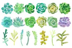 Watercolor cactus and succulent set by Just_create on Creative Market Succulent Tattoo, Succulents Drawing, Watercolor Succulents, Watercolor Cactus, Cacti And Succulents, Succulents Painting, Watercolour Painting, Watercolor On Wood, Watercolours