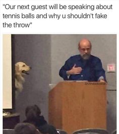 Funny, Memes, Pictures: dog-and-tennis-balls