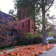 St Peter's pumpkin patch in Oxford, Mississippi ... almost screamed when I saw this- so proud