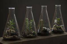 ken marten - Lab Flask Terrariums