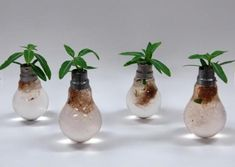 10 really clever planter ideas using old lightbulbs. Really clever stuff, would be great for my desk at the office.