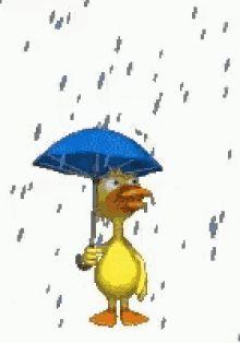 The perfect Rain Duck Umbrella Animated GIF for your conversation. Discover and Share the best GIFs on Tenor. Gif Naruto, Vogel Gif, Gif Kpop, Rain Gif, Witch Room, Gb Bilder, Love Rain, Red Umbrella, Buzzard