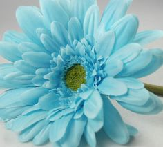 I love gerber daisies! These will go perfect with my red and tiffany blue wedding colors.