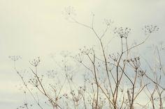 Fragile, delicate, nature, slim