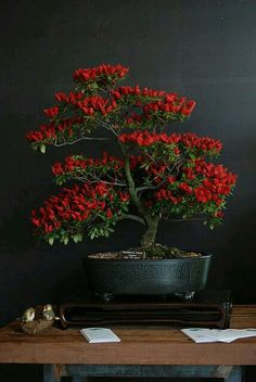 [From: Katherine, To: Julian] Katherine gifted Julian one of her favorite types of plants, the bonsai tree. She hopes he'll enjoy its beautiful presence.