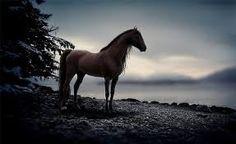 Картинки по запросу лошади на озере
