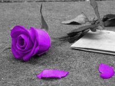 Google Image Result for http://www.deviantart.com/download/23922206/Purple_Rose_by_RazorxXxKisses.jpg