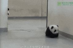 Where Do You Think You're Going Young Man, this is adorable!! Click on the pic to see the gif :)