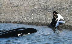 Roberto Bubas toca la armónica y las orcas lo escuchan.