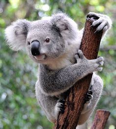 This buddy is on in my list of animals to know! :3