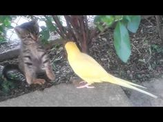 Parrot Wants To Befriend Cautious Kitten - We Love Cats and Kittens