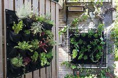 Balkon gestalten: Eetbare Wand für vertikalen Balkongarten