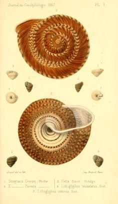 t 15 (1867) - Journal de conchyliologie. - Biodiversity Heritage Library