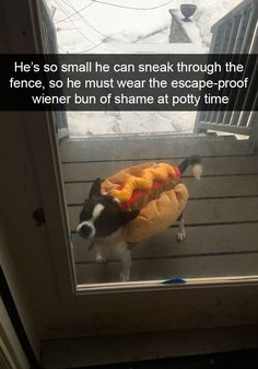 "30 Adorable Doggo Snaps That'll Warm Your Cold Heart - Funny memes that ""GET IT"" and want you to too. Get the latest funniest memes and keep up what is going on in the meme-o-sphere. Funny Dog Photos, Funny Dog Memes, Funny Animal Memes, Cute Funny Animals, Funny Animal Pictures, Funny Cute, Dog Pictures, Funny Dogs, Dog Humor"