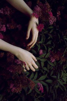 Purple Flowers. Fantasy Photography.