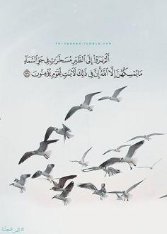to-jannah:  النحل   An-Nahl