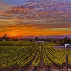 I suppose Summer Solstice (capitalized because tonight it had a personality!) wanted to make a statement for all of us here in Nor Cal....what do you think!? Good night from Wine Country! #bns_sky #bns_sunset #bayareabuzz #california4fun #caliexplored #country_features #clouds_of_our_world #destinationearth #escaype #everything_imaginable #fotofanatics_sky_ #fpog #heart_imprint #igmasters #ig_serenity #ig_sharepoint #ig_countryside #ig_shutterbugs #jj_skylove #master_shots…