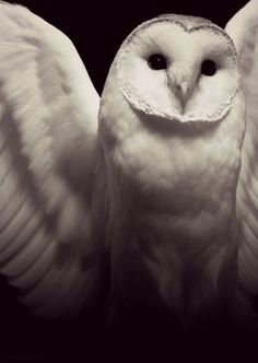 27 Pictures Of Owls That Will Make Your Bones Shiver – The Awesome Daily - Your daily dose of awesome#.VNbCY_hoh9U.facebook#.VNbCY_hoh9U.facebook