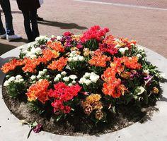 Amsterdam#flowers#tulips by laradvolpe