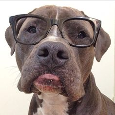 """Do my new glasses make me look smarter?"""