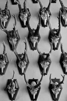 Danish hunting trophies