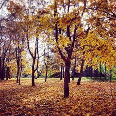 Autumn trees are so beautiful
