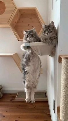 Funny Cute Cats, Cute Baby Cats, Cute Little Animals, Cute Cats And Kittens, Cute Funny Animals, I Love Cats, Crazy Cats, Kittens Cutest, Cute Dogs