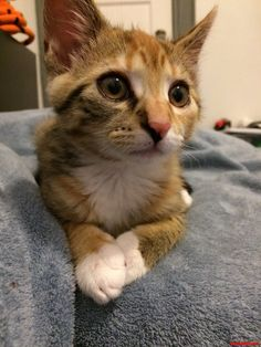 Cats of new york. - http://cutecatshq.com/cats/cats-of-new-york-3/