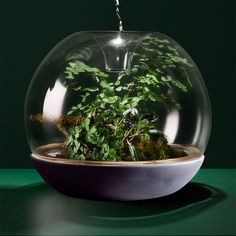 Add a little taste of outdoors to your coffee table or desk 🍃💚🌱🌿  Biodome is a stunning vivarium that magnifies the beauty of ferns, small plants and mosses under its glass dome.  The dome has been carefully designed with an opening in the top to enable watering and airflow, making it conducive to both temperate and tropical plants. Succulents also flourish with minimal watering.  The Biodome is a semi-open micro-climate to house delicate bryophytes and terrarium plants.