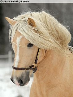 Kuva - Love this & sweet face. Horses And Dogs, Cute Horses, Pretty Horses, Horse Love, Beautiful Horses, Palomino, Horse Pictures, Pictures To Draw, Mundo Animal