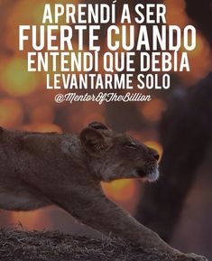 RAll my life Motivational Phrases, Inspirational Quotes, Mentor Of The Billion, Leo Quotes, Quotes En Espanol, Millionaire Quotes, Spanish Quotes, Life Motivation, Business Motivation