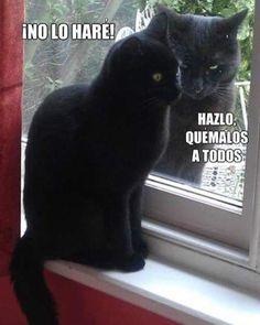 videos graciosos memes risas gifs graciosos chistes divertidas humor http://chistegraficos.tumblr.com/post/158157393578