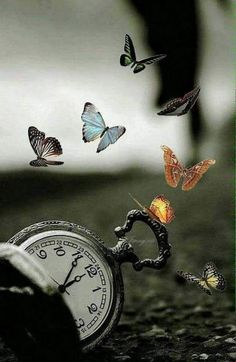 Missing my little butterfly. Time does not make it better. Butterfly Wallpaper, Butterfly Art, Nature Wallpaper, Clock Wallpaper, Smile Wallpaper, Creative Photography, Amazing Photography, Nature Photography, Fantasy Photography