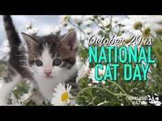 October 29 - National Cat Day.  #nationalcatday  #pets #cats #kitty #worldcatday