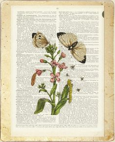1600's botanical artwork VIII printed on page from by FauxKiss