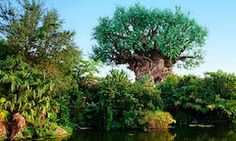 Animal Kingdom WDW