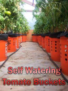 DIY - Self Watering Tomato Buckets