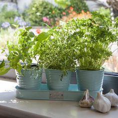 Buy Set of three herb pots: Delivery by Waitrose Garden in association with Crocus
