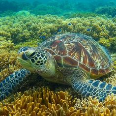 Lovely Creatures, Wild Creatures, All Gods Creatures, Sea Turtle Pictures, Animals Beautiful, Cute Animals, Hawaiian Sea Turtle, Underwater Sea, Salt Water Fish