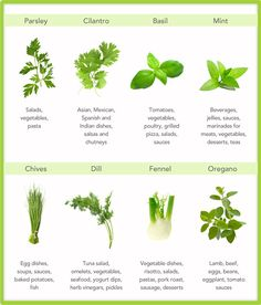 Leaf Relief: 8 Awesome Herbs for Your Kitchen and what they can do for you