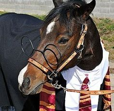 PetsLady's Pick: Funny Harry Potter Horse Of The Day  ... see more at PetsLady.com ... The FUN site for Animal Lovers