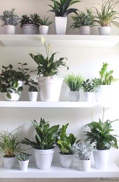 DIY cheap plant wall with real and fake plants