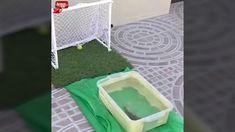 Futbolcu Balık - Hemen İzle
