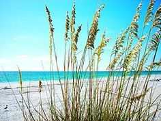 aqua beaches - Google Search