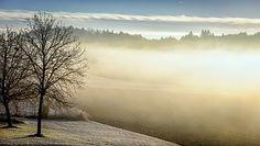 Invierno, Mañana, Niebla, Árbol, Bosque